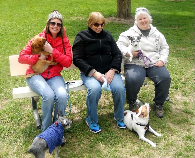 Dog park 2012   3
